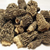 Morels 1st Choice Dried - 0.5 lbs